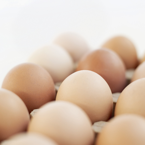 Close-up of farm eggs